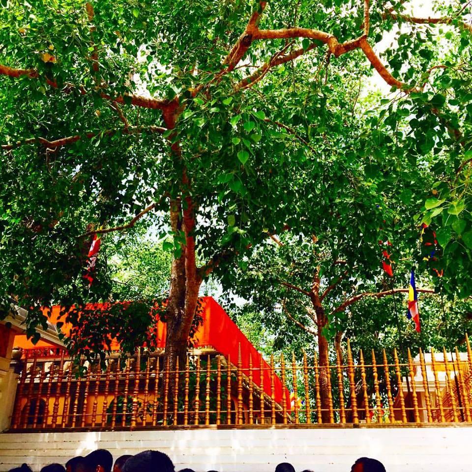 Solosmasthana : Jaya Sri Maha bodhiya